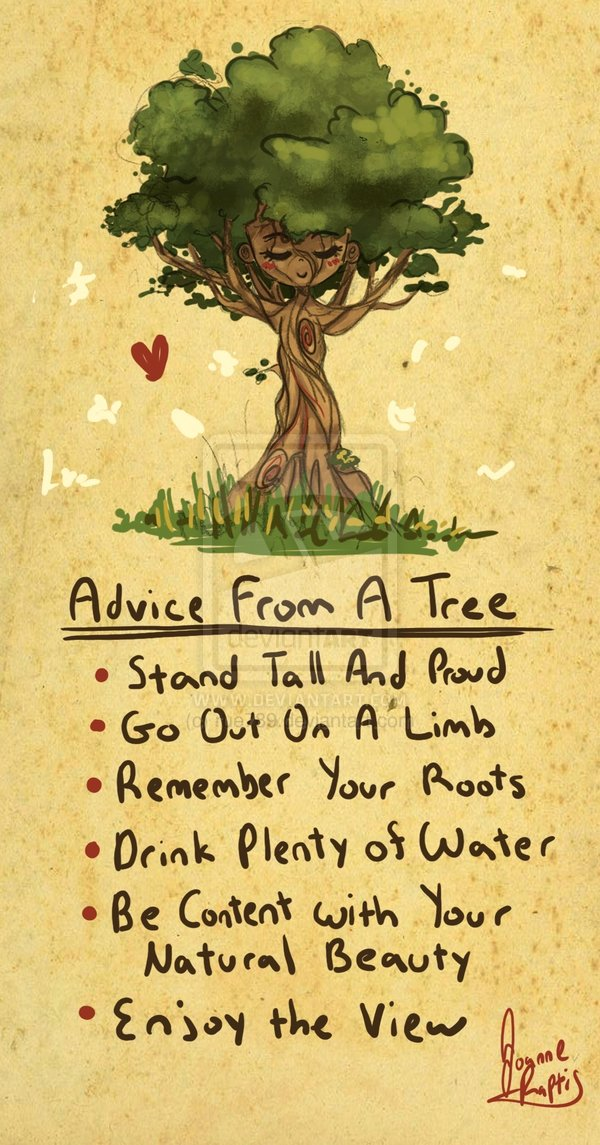 Advice from a tree…   Tea, Cake and Happiness